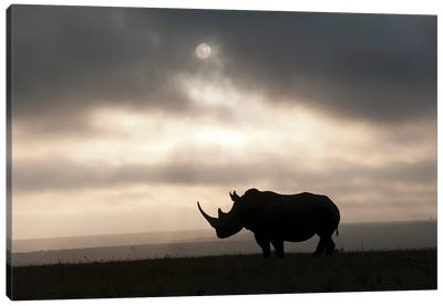 White Rhinoceros At Sunset, Solio Game Reserve, Kenya Canvas Art Print