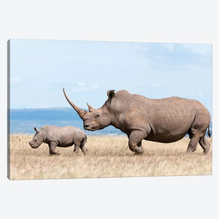 White Rhinoceros Mother And Calf, Solio Ranch, Kenya Canvas Print #TUI64} by Tui De Roy Canvas Wall Art
