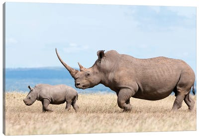White Rhinoceros Mother And Calf, Solio Ranch, Kenya Canvas Art Print