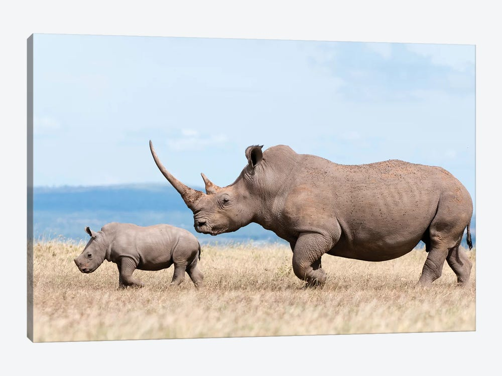 White Rhinoceros Mother And Calf, Solio Ranch, Kenya by Tui De Roy 1-piece Canvas Wall Art