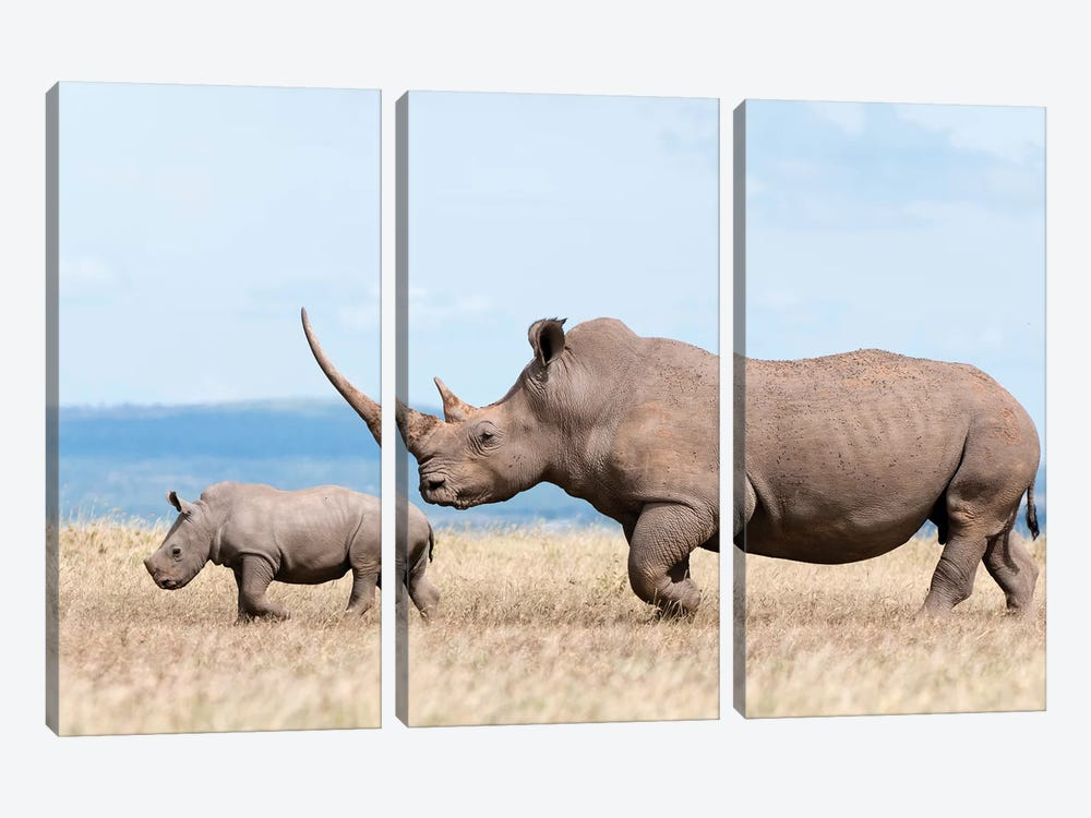 White Rhinoceros Mother And Calf, Solio Ranch, Kenya by Tui De Roy 3-piece Canvas Wall Art