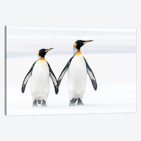 King Penguin Pair On Beach, Volunteer Beach, East Falkland Island, Falkland Islands Canvas Print #TUI73} by Tui De Roy Canvas Wall Art