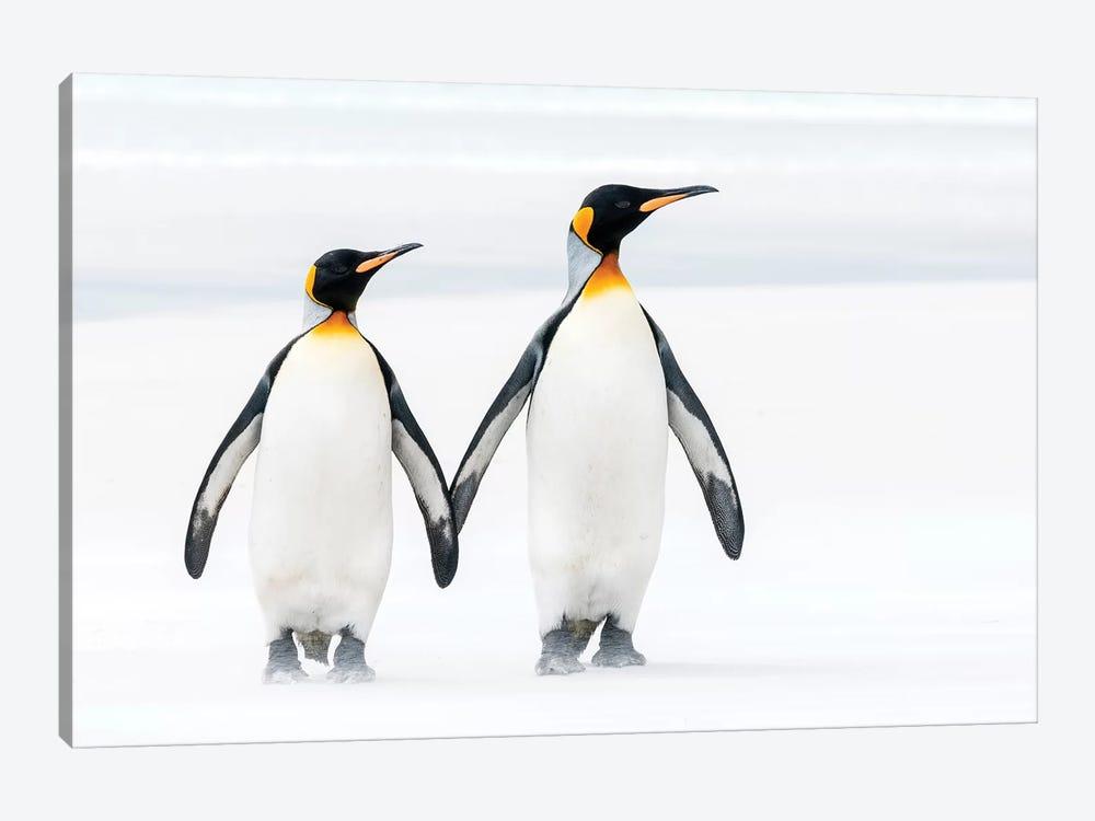 King Penguin Pair On Beach, Volunteer Beach, East Falkland Island, Falkland Islands by Tui De Roy 1-piece Canvas Artwork