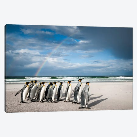 King Penguins On Beach Under Rainbow, Volunteer Beach, East Falkland Island, Falkland Islands I Canvas Print #TUI76} by Tui De Roy Canvas Art Print