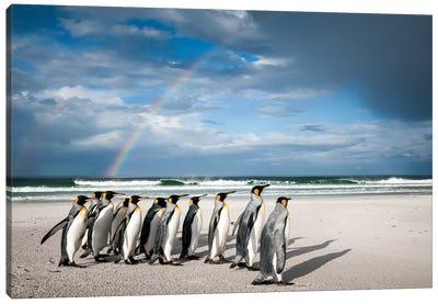 King Penguins On Beach Under Rainbow, Volunteer Beach, East Falkland Island, Falkland Islands I Canvas Art Print