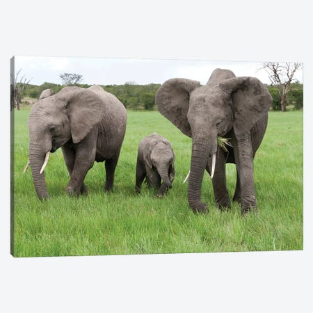 African Elephant Group Grazing, Ol Pejeta Conservancy, Kenya Canvas Print #TUI7} by Tui De Roy Canvas Art