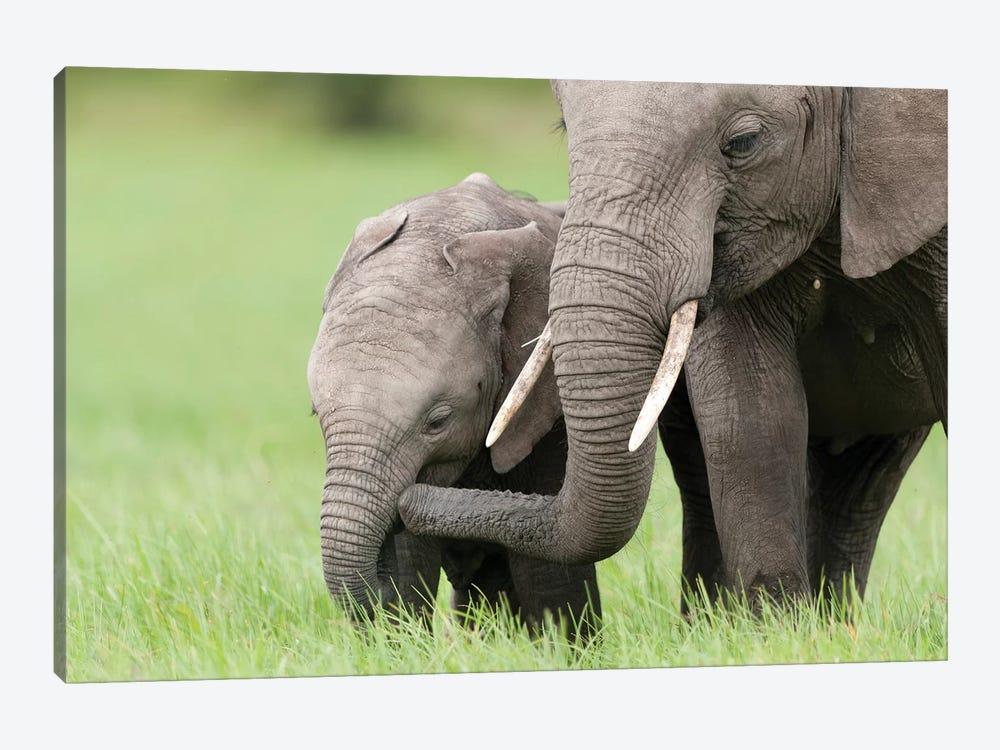 African Elephant Juvenile And Calf, Ol Pejeta Conservancy, Kenya I by Tui De Roy 1-piece Canvas Art Print