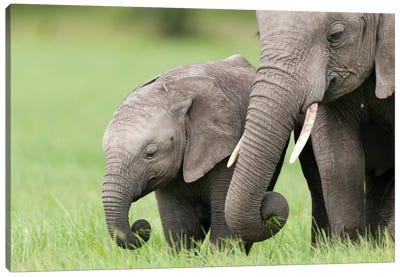 African Elephant Juvenile And Calf, Ol Pejeta Conservancy, Kenya II Canvas Art Print