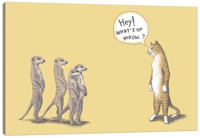 Cat And Meerkats Canvas Art Print