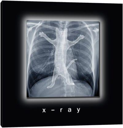 X-ray Canvas Art Print
