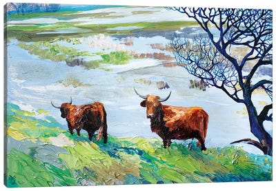 Dutch Bulls Canvas Art Print