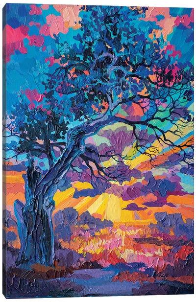 Old Oak Canvas Art Print