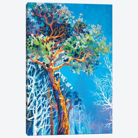 Pine Canvas Print #TVA28} by Anastasia Trusova Art Print