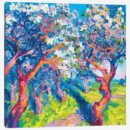 Apple Trees In Bloom Canvas Print #TVA54} by Anastasia Trusova Art Print