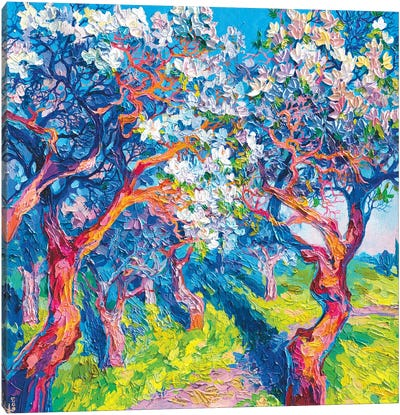 Apple Trees In Bloom Canvas Art Print
