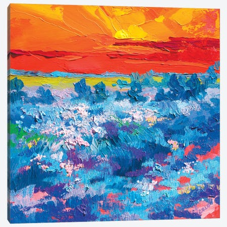 Cornflowers At Suset Canvas Print #TVA57} by Anastasia Trusova Canvas Print
