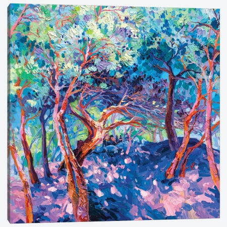 Southern France. Pine Tree Canvas Print #TVA95} by Anastasia Trusova Art Print