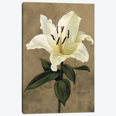 Lily Canvas Print #TVL10} by Andrea Trivelli Canvas Art Print