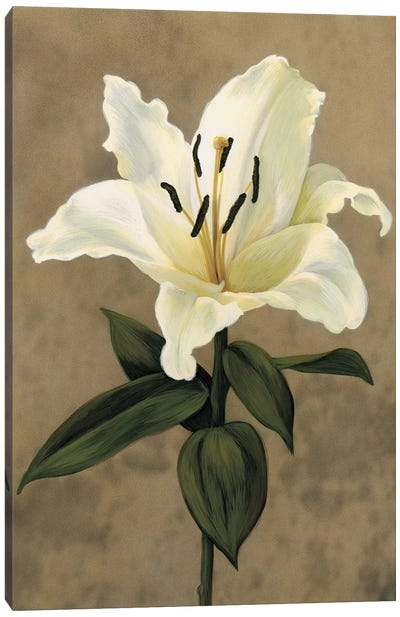Lily Canvas Art Print