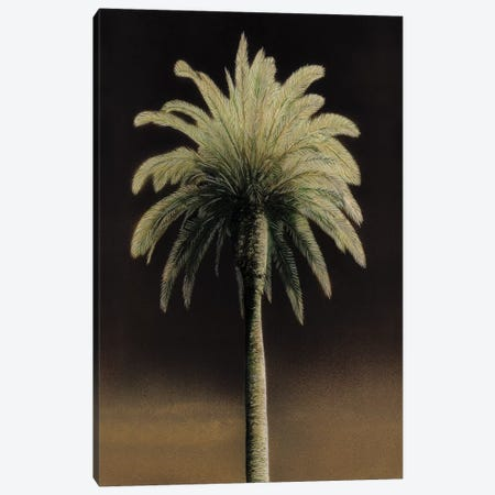 Palmas I Canvas Print #TVL11} by Andrea Trivelli Canvas Print
