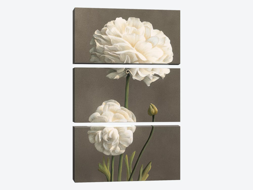 Dalie by Andrea Trivelli 3-piece Canvas Print