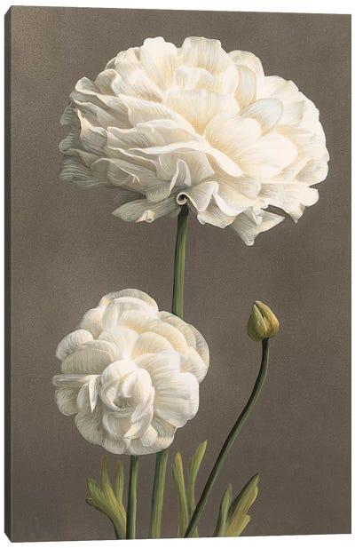 Dalie Canvas Art Print