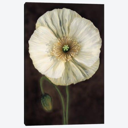 Flora I Canvas Print #TVL2} by Andrea Trivelli Canvas Art Print