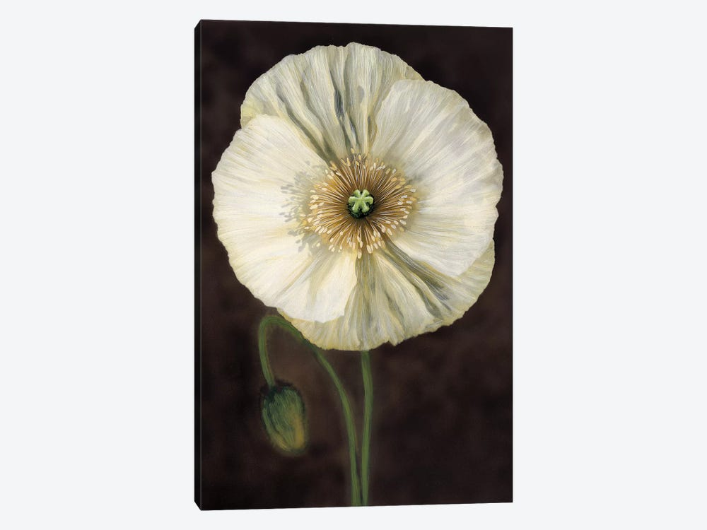 Flora I by Andrea Trivelli 1-piece Canvas Wall Art