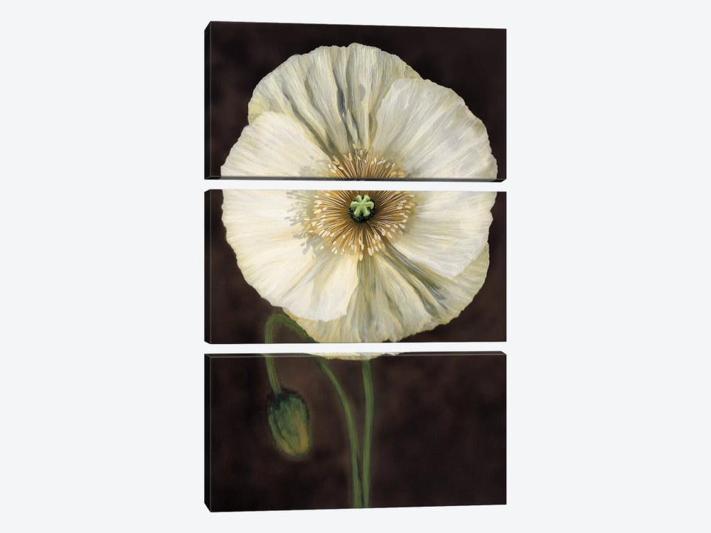 Flora I by Andrea Trivelli 3-piece Canvas Art