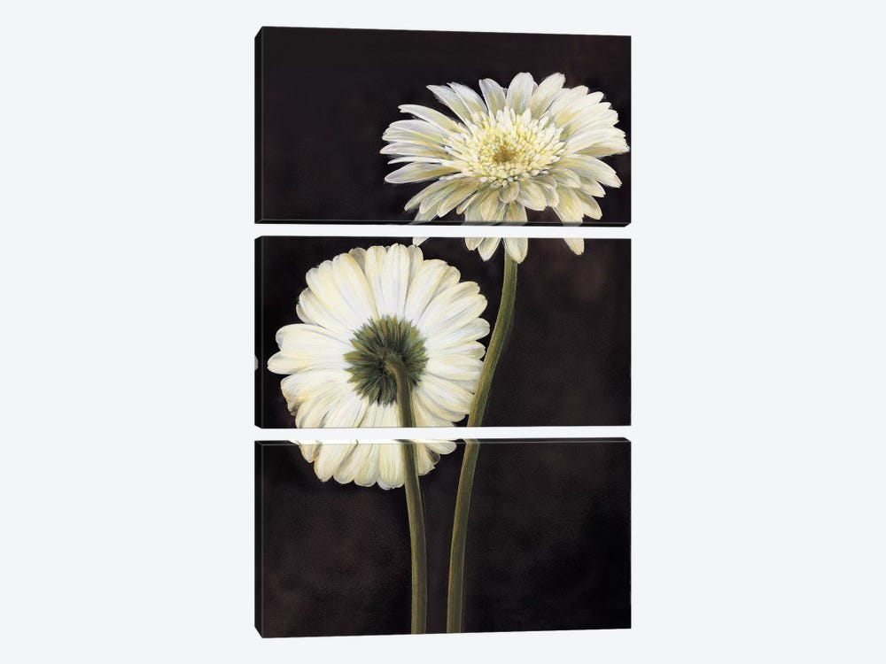 Flora II by Andrea Trivelli 3-piece Canvas Art Print