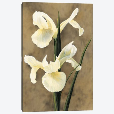 Iris Canvas Print #TVL4} by Andrea Trivelli Canvas Wall Art