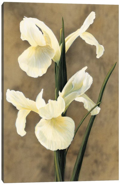 Iris Canvas Art Print