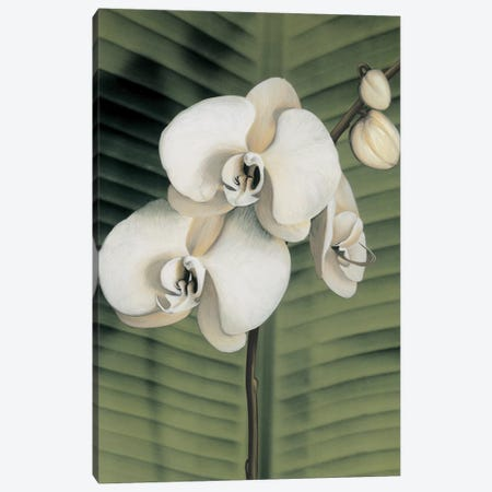 Orchid With Palm II Canvas Print #TVL6} by Andrea Trivelli Canvas Artwork