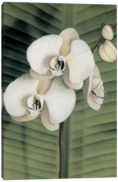 Orchid With Palm II Canvas Art Print