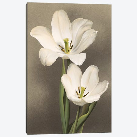 Tulipani Canvas Print #TVL7} by Andrea Trivelli Canvas Wall Art