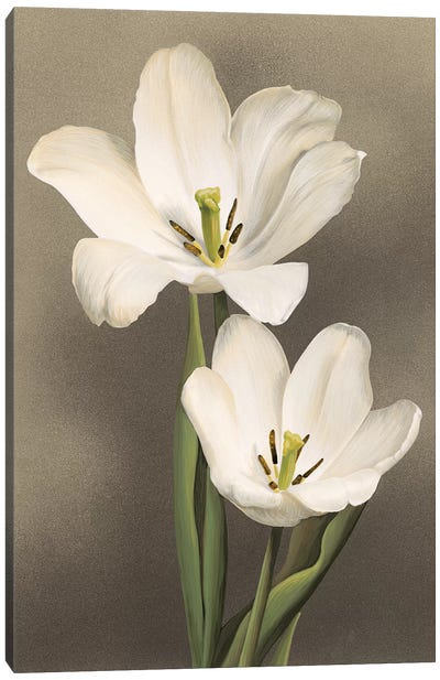 Tulipani Canvas Art Print