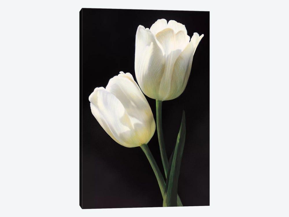 Tulipani bianchi by Andrea Trivelli 1-piece Canvas Print