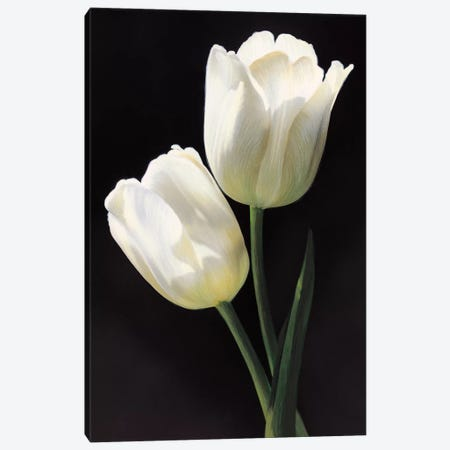 Tulipani bianchi 3-Piece Canvas #TVL9} by Andrea Trivelli Art Print