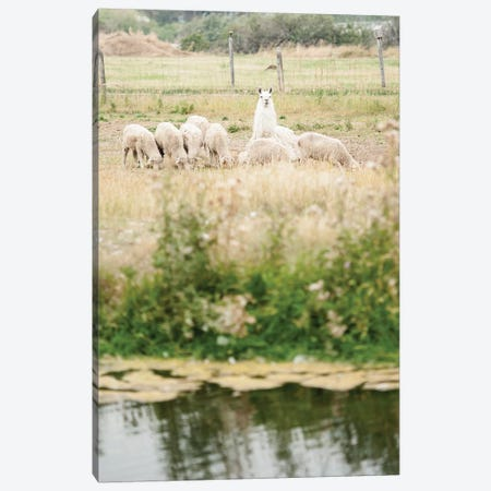 Carl The Llama Canvas Print #TWG55} by The Whiskey Ginger Canvas Artwork