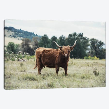 Highlander Cow Canvas Print #TWG58} by The Whiskey Ginger Canvas Print
