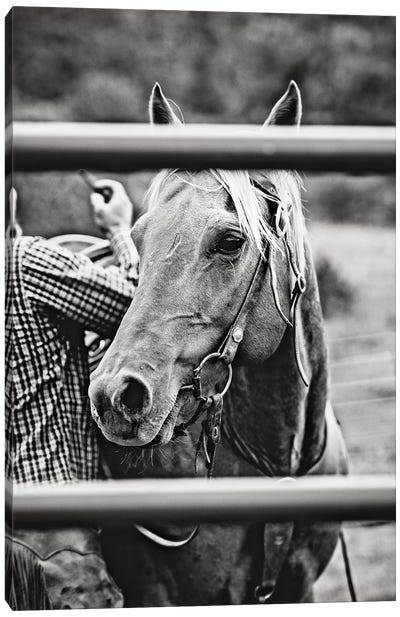 Saddling Horse Canvas Art Print