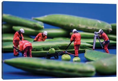Work In Peas Canvas Art Print