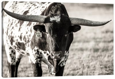 Longhorn Portrait Canvas Art Print