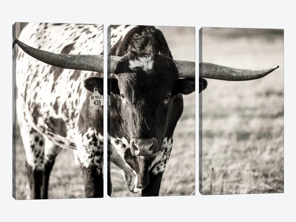 Longhorn Portrait by Tyler Stockton 3-piece Canvas Print