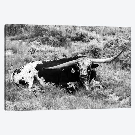 B&W Longhorn I Canvas Print #TYS19} by Tyler Stockton Canvas Art