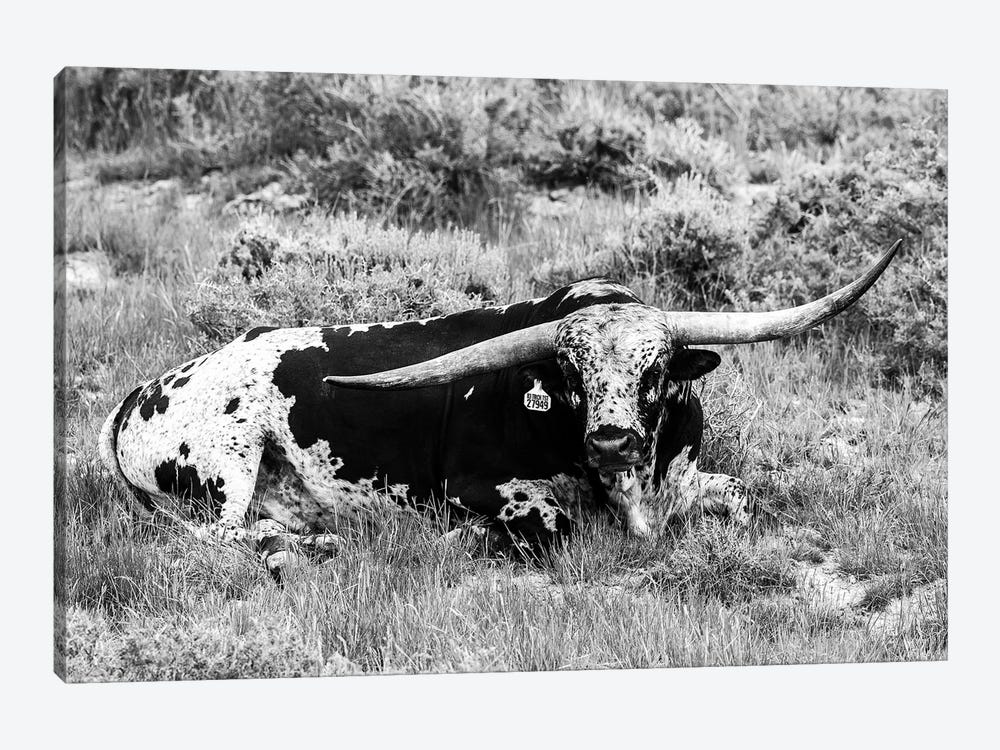 B&W Longhorn I by Tyler Stockton 1-piece Canvas Artwork