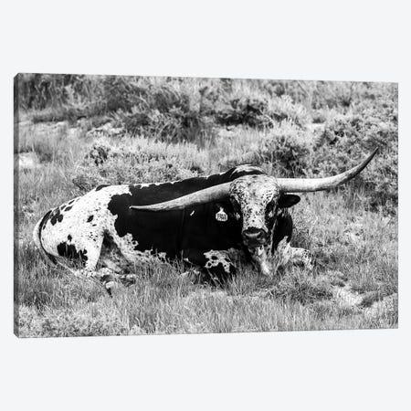 B&W Longhorn I Canvas Print #TYS19} by Tyler Stockton Canvas Art