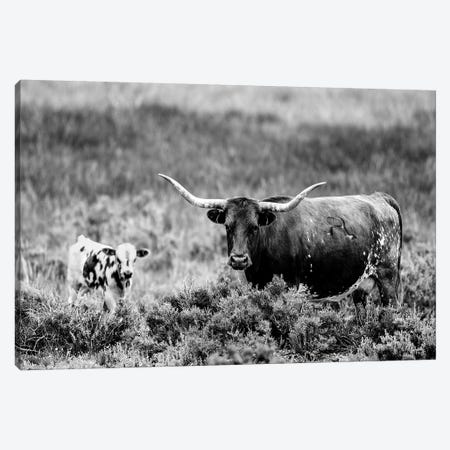 B&W Longhorn II Canvas Print #TYS20} by Tyler Stockton Art Print