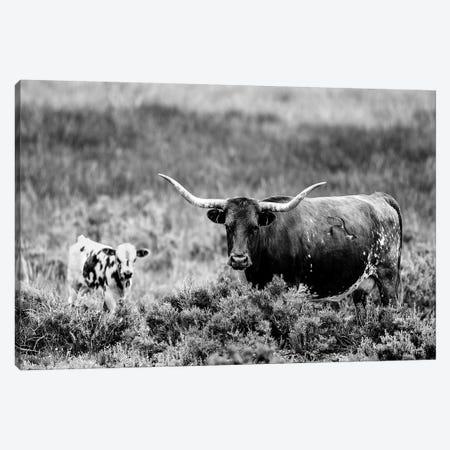 B&W Longhorn II Canvas Print #TYS20} by Tyler Stockton Art Print