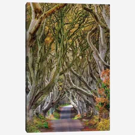 The Dark Hedges In County Antrim, Northern Ireland Canvas Print #UCK105} by Chuck Haney Canvas Art